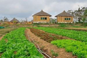สวนผักปลอดสารพิษลุงไกร
